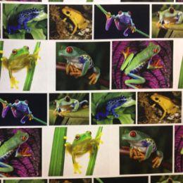 Tropical Frog - Digital Print Fabric