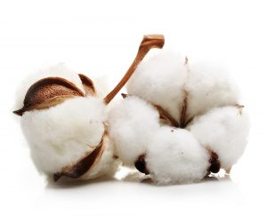 Egyptian Cotton Fabric Post - Raw Cotton Plant